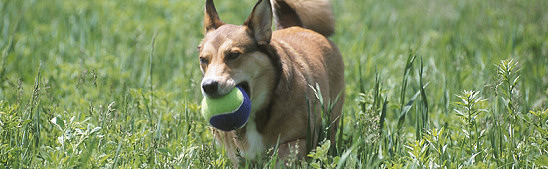 Daog with ball