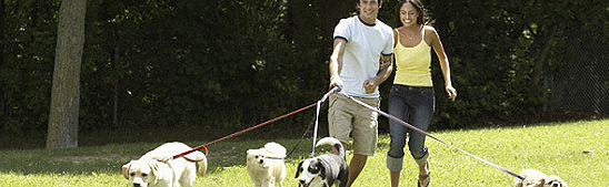 Two people walking four dogs